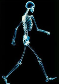 [An x-ray image of a person walking]